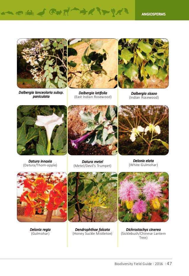 givotia moluccana analysis Phytochemical analysis revealed the  investigation of givotia moluccana int j res pharm  journal of pharmaceutical sciences and research.