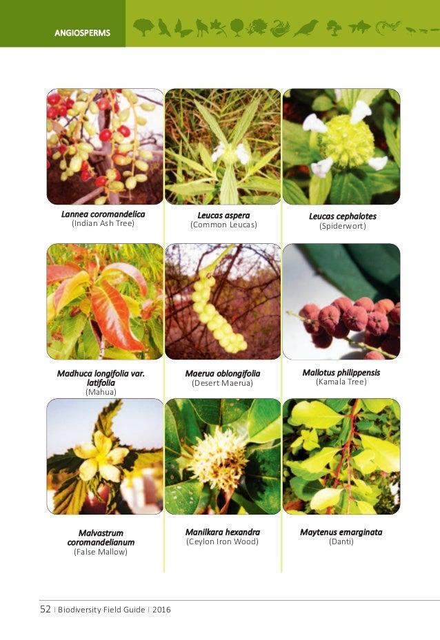 A P Biodiversity Field Guide