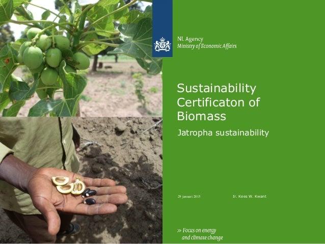 29 januari 2015 Sustainability Certificaton of Biomass Jatropha sustainability Ir. Kees W. Kwant