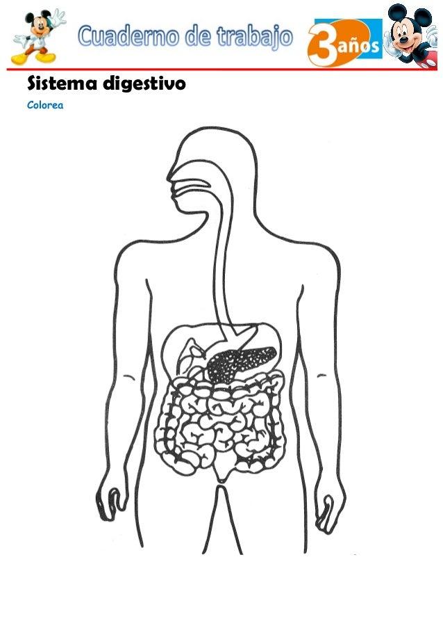 Dorable Sistema Digestivo Para Colorear Molde - Dibujos Para ...