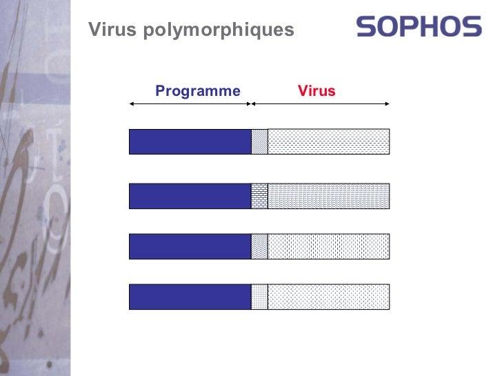 Virus polymorphiques      Programme        Virus