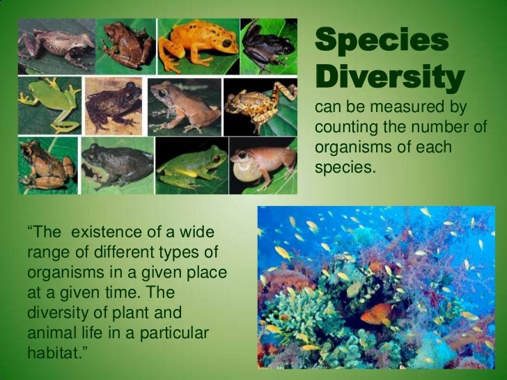 biodiversity and species It is now widely recognized that climate change and biodiversity are interconnected biodiversity is affected by climate change, with negative consequences for human well-being, but biodiversity, through the ecosystem services it supports, also makes an important contribution to both climate-change mitigation and adaptation.