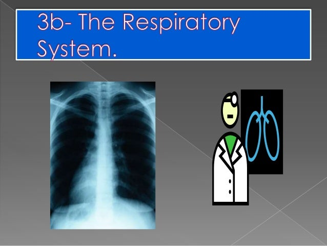 Index.  1.New  words  2.Breathing and parts of the respiratory system.  3.Phases of breathing.  4.Activities.  5.Expe...