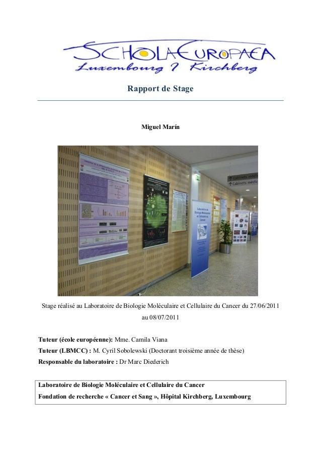 Rapport de Stage Miguel Marín Stage réalisé au Laboratoire de Biologie Moléculaire et Cellulaire du Cancer du 27/06...