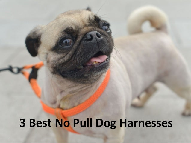Best No Pull Dog Harness  5