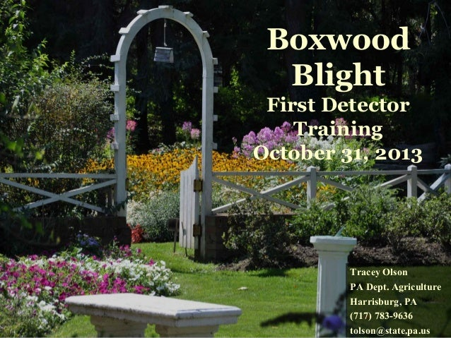 Boxwood Blight First Detector Training October 31, 2013  Tracey Olson PA Dept. Agriculture Harrisburg, PA (717) 783-9636 t...