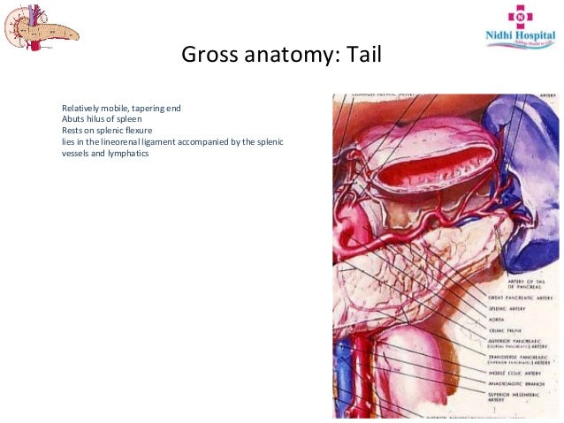 Resectional Anatomy Of Pancreas