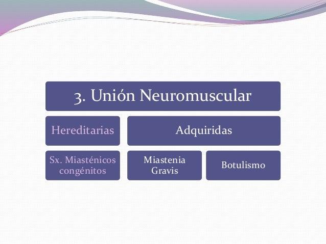 3. Unión Neuromuscular Hereditarias Sx. Miasténicos congénitos Adquiridas Miastenia Gravis Botulismo