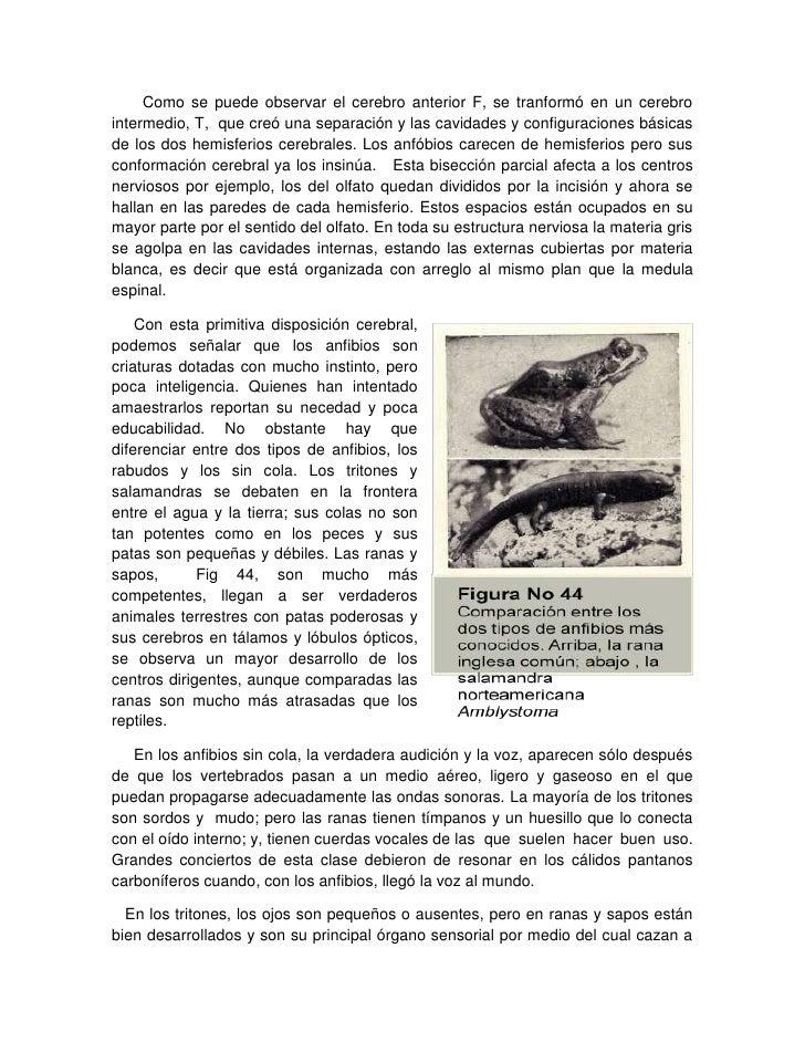 3 comportamiento en insectos y vertebrados