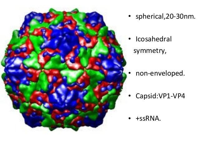 Coxsackie Virus