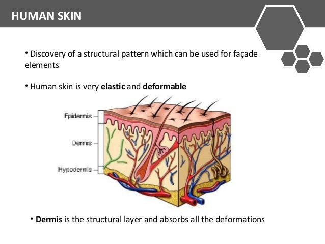 HUMAN SKIN  • Discovery of a structural pattern which can be used for façade  elements  • Human skin is very elastic and d...