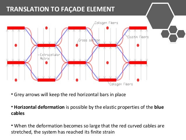 TRANSLATION TO FAÇADE ELEMENT  • Grey arrows will keep the red horizontal bars in place  • Horizontal deformation is possi...