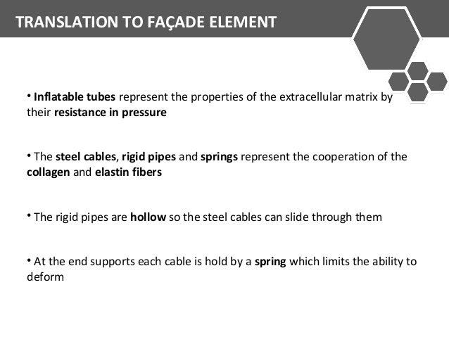 TRANSLATION TO FAÇADE ELEMENT  • Inflatable tubes represent the properties of the extracellular matrix by  their resistanc...