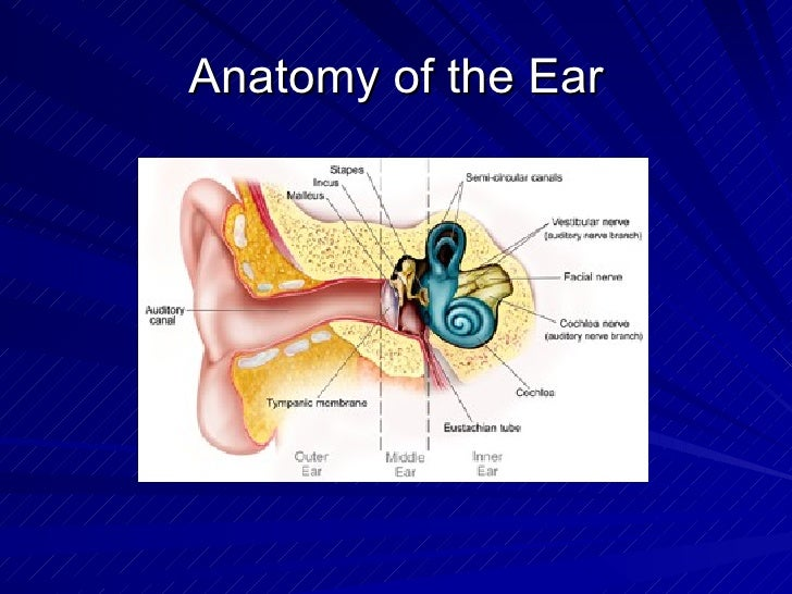 3d Ct Middle And Inner Ear