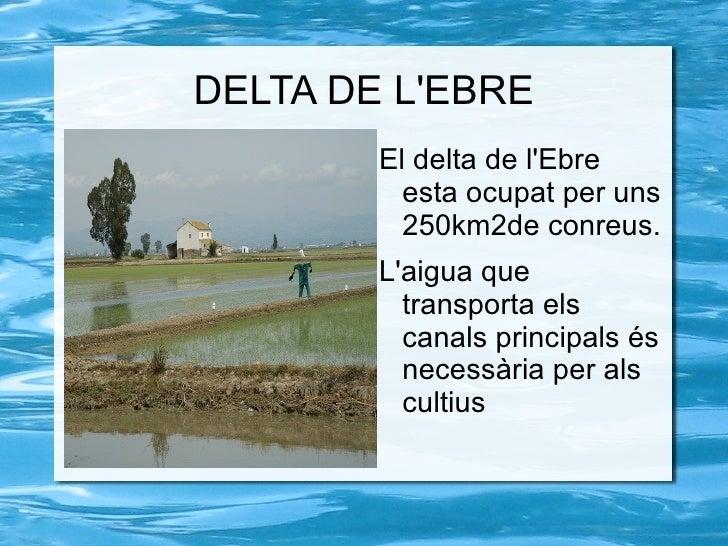 DELTA DE LEBRE        El delta de lEbre          esta ocupat per uns          250km2de conreus.        Laigua que         ...