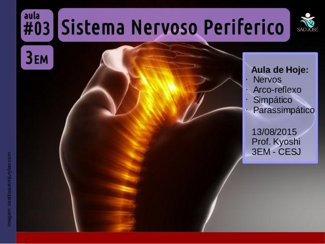 Imagem:seattleautoinjurylaw.com Sistema Nervoso Periferico 3EM #03 aula 13/08/2015 Prof. Kyoshi 3EM - CESJ Aula de Hoje: •...