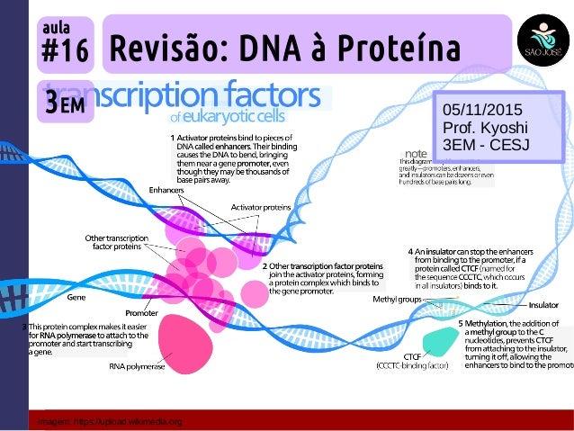 Imagem: https://upload.wikimedia.org Revisão: DNA à Proteína 3EM #16 aula 05/11/2015 Prof. Kyoshi 3EM - CESJ