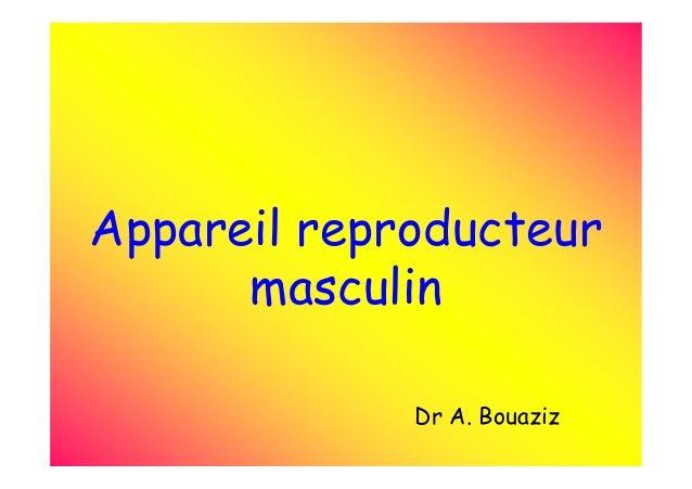 Appareil reproducteur masculin Dr A. Bouaziz