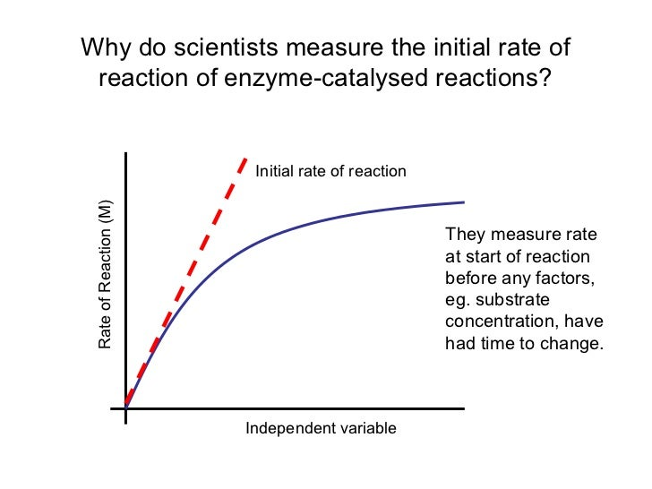 enzymes temperature coursework Labbench activity temperature and enzyme function chemical reactions speed up as temperature is increased, so, in general, catalysis will increase at higher temperatures.
