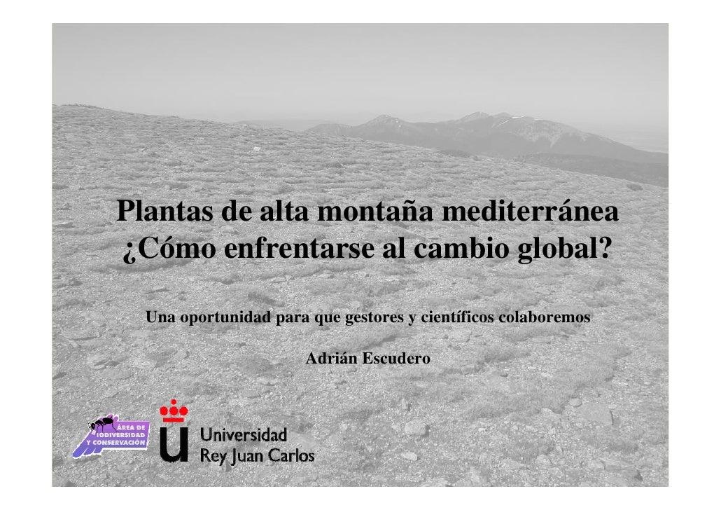 Plantas de alta montaña mediterránea ¿Cómo enfrentarse al cambio global?    Una oportunidad para que gestores y científico...
