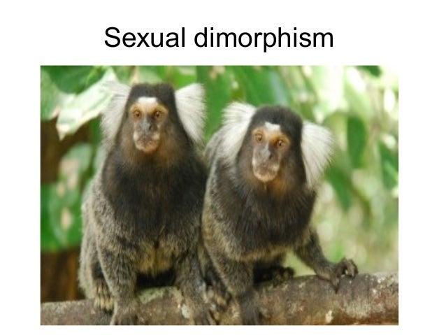 Sexual dimorphism in primates