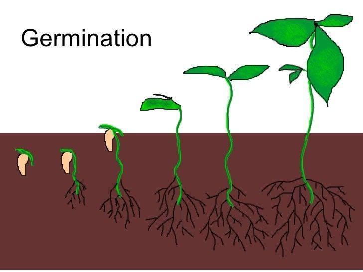 Chapter 16 Reproduction in Plants Lesson 3 - Fertilization & post fer…