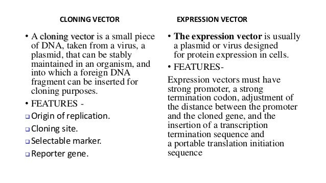 cloning and expression vector in plants