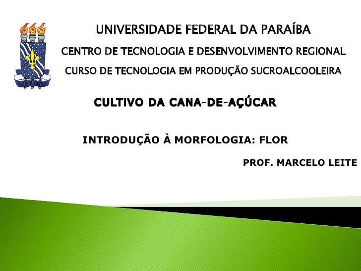 UNIVERSIDADE FEDERAL DA PARAÍBA<br />CENTRO DE TECNOLOGIA E DESENVOLVIMENTO REGIONAL<br />CURSO DE TECNOLOGIA EM PRODUÇÃO ...