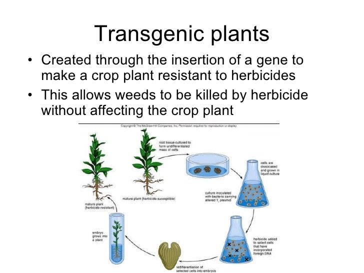 Chapter 20 Molecular Genetics Lesson 3 - Genetic Engineering