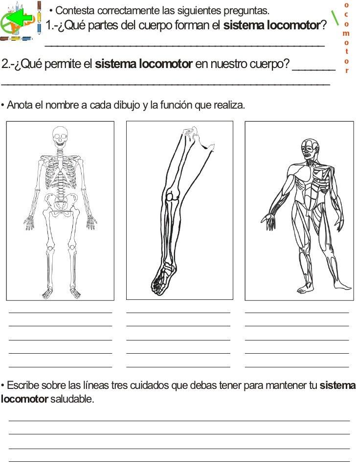 Contemporáneo Hojas De Trabajo Sobre El Sistema Esquelético Para El ...