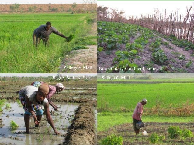 23 August 2015| 14 Global Water Initiative – West Africa www.gwiwestafrica.org Bagré, Burkina Faso Niandouba / Confluent, ...
