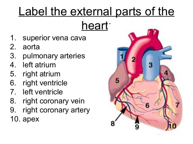 Diagram of the heart to label year 6 wiring circuit chapter 8 transport in humans lesson 3 structure and function of th rh slideshare net label parts of the heart all the labels of the heart ccuart