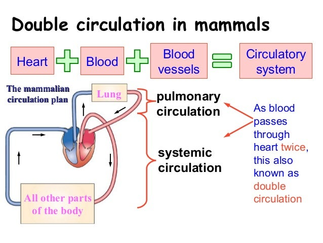 double circulatory system essay not found double circulatory system essay