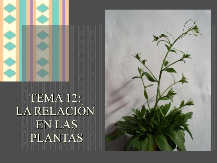 La relaci n en las plantas for Hormonas en las plantas