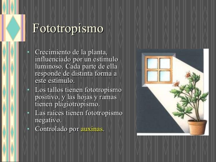 Que es fototropismo y ejemplos 4
