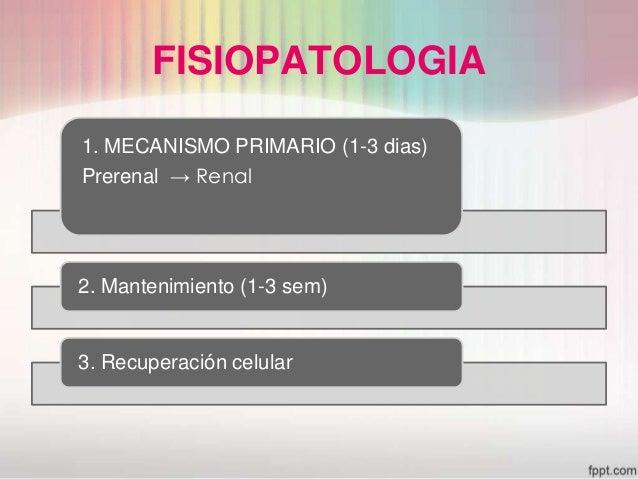 insuficiencia renal aguda Slide 10