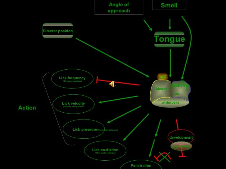 Smell P172 whimpers saliva CBS CBS CBS CBS Moans Lick velocity (Glucose transporter 4) Lick pressure (Phosphofructokinase}...