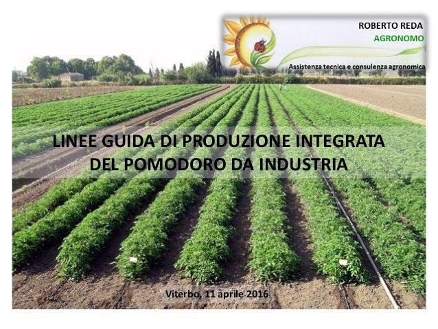LINEE GUIDA DI PRODUZIONE INTEGRATA DEL POMODORO DA INDUSTRIA Viterbo, 11 aprile 2016