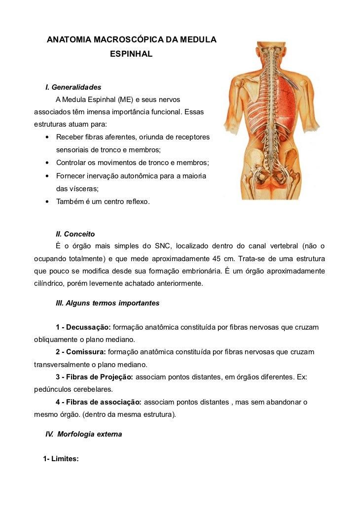 ANATOMIA MACROSCÓPICA DA MEDULA                          ESPINHAL      I. Generalidades        A Medula Espinhal (ME) e se...
