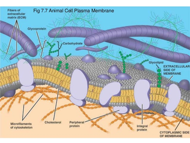 Membrane structure and transport for medical school
