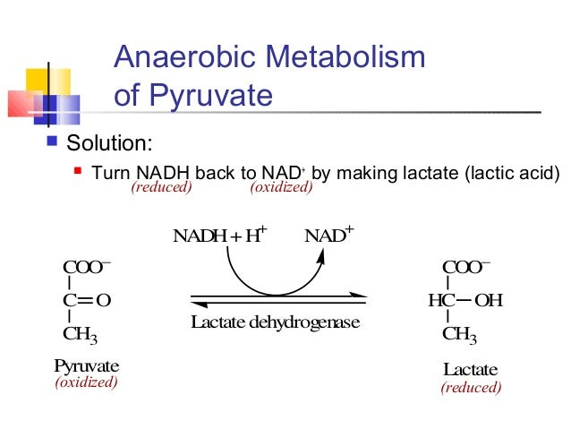 nad to nadh anabolic or catabolic