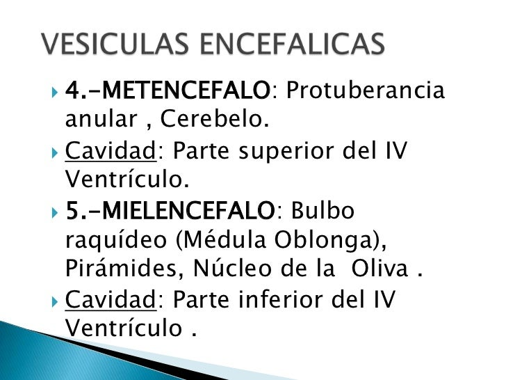 VESICULAS ENCEFALICAS<br />4.-METENCEFALO: Protuberancia anular , Cerebelo.        <br />Cavidad: Parte superior del IV Ve...