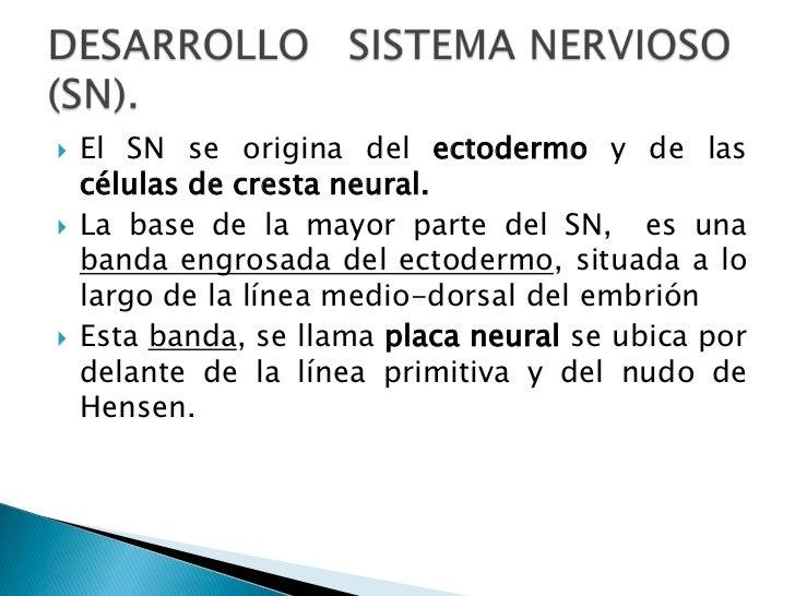 El SN se origina del ectodermo y de las células de cresta neural.<br />La base de la mayor parte del SN,  es una banda eng...