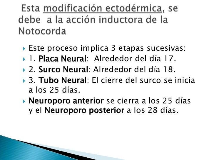 Esta modificación ectodérmica, se debe  a la acción inductora de la Notocorda<br />Este proceso implica 3 etapas sucesiva...