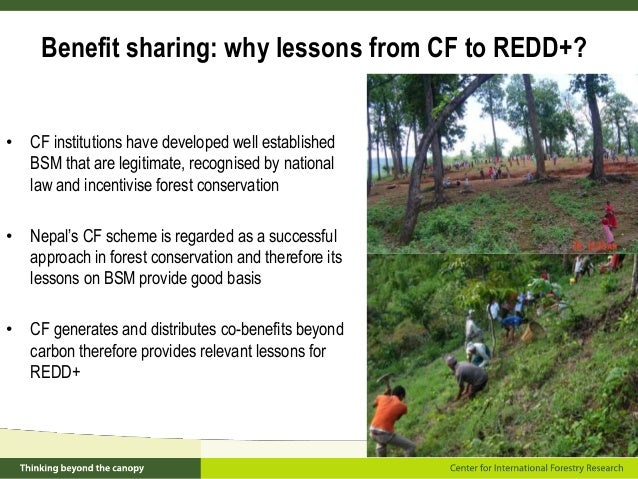 status of forest in nepal National forest information system  nepal has prepared its redd+ readiness  preparation proposal (r-pp) the implementation of the r-pp is being.