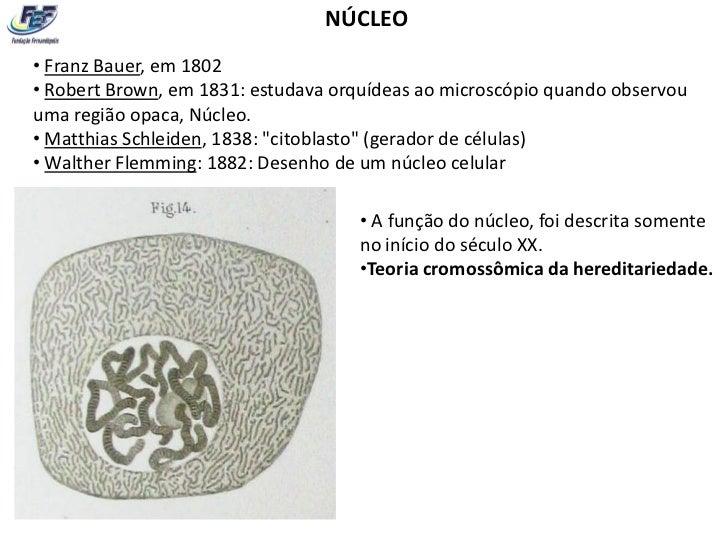 NÚCLEO• Franz Bauer, em 1802• Robert Brown, em 1831: estudava orquídeas ao microscópio quando observouuma região opaca, Nú...
