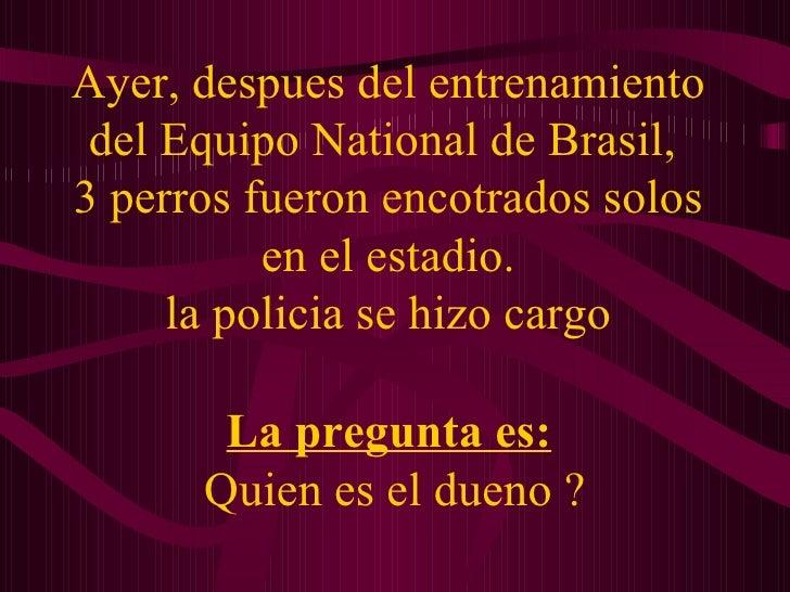 Ayer, despues del entrenamiento del Equipo National de Brasil,  3 perros fueron encotrados solos en el estadio. la policia...