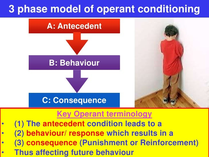 3 Phase Model Of Operant Conditioning Vce U4 Psych