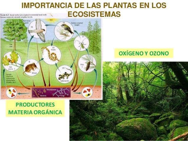 3 plantas for Importancia de los viveros forestales