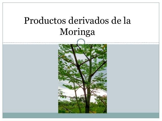 Productos derivados de la        Moringa